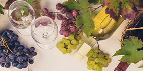 Ökologische und biodynamische Weine