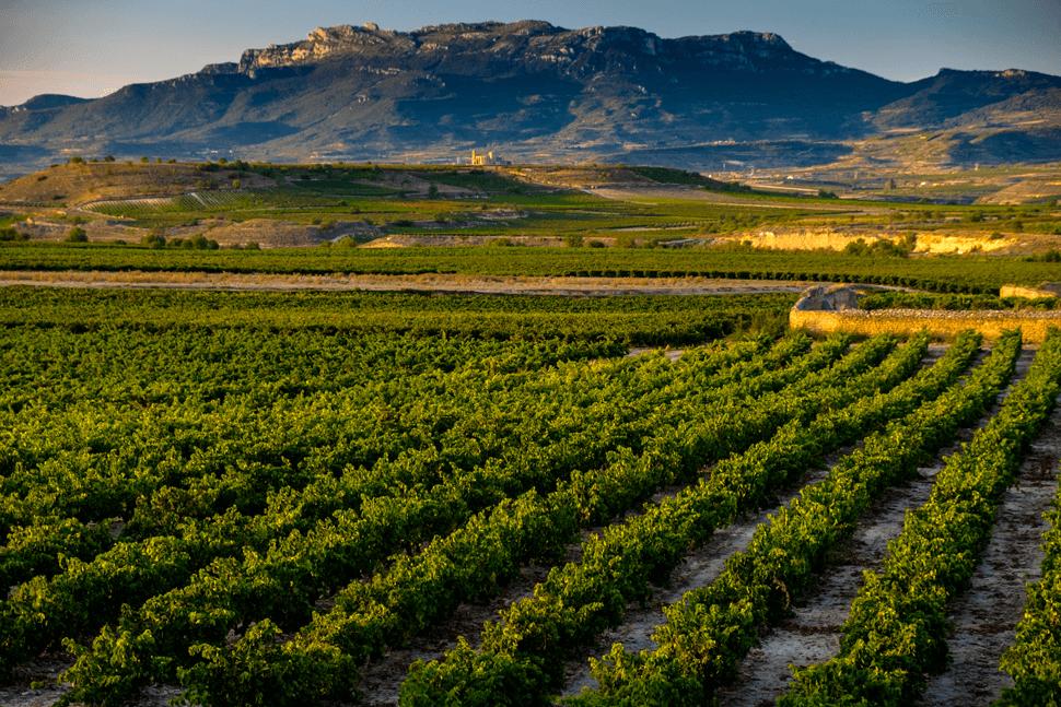 Rioja Alta