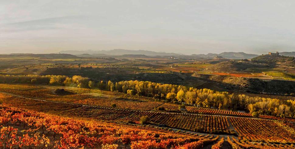 Oriental Rioja