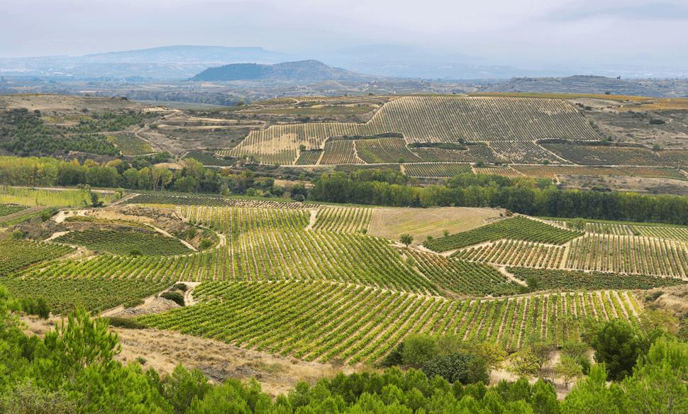 Rioja Landschaft