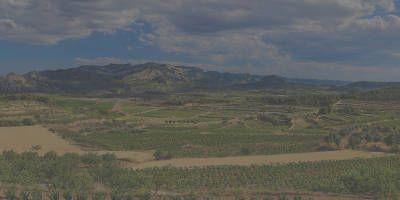 Agrícola Sant Josep