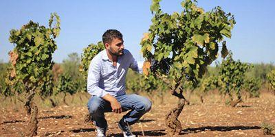 Di generazione in generazione, un legame di vino