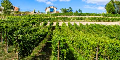 Bargiela Bienati Winery