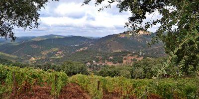 Bodega y Viñedos Cerro San Cristóbal