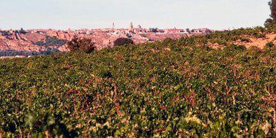 Vinos Bigardo