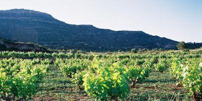 Cellers Baronia del Montsant