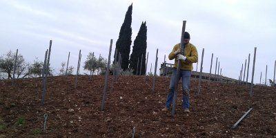 Azienda Agricola Cantrina