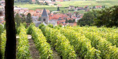 Le Mesnil sur Oger. FOTO: Champagne Delamotte