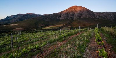 Keermont Vineyards