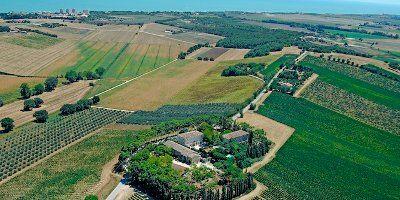 Le Terrazze Chaos 2013 - Acquistare vino Rosso - Marche - Fattoria ...