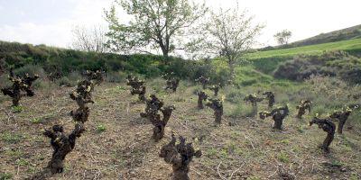 LMT Wines - Luis Moya
