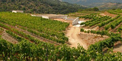 Maius Viticultors