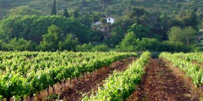 Montau de Sadurní