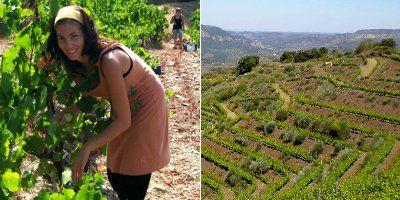 Mas Martinet Viticultors