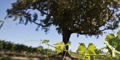 Pian delle Vigne - Marchesi Antinori