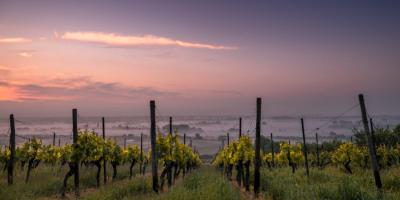 Raíces Ibéricas - Master Winemakers