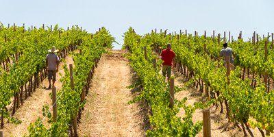 Samsara Wines