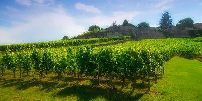 23dc918fd02 Château Saint Georges Côte Pavie - Buy wines - Vinissimus