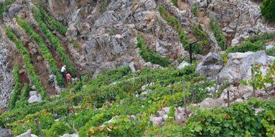 Sílice Viticultores