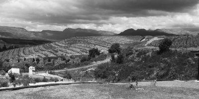Spioenkop Wines