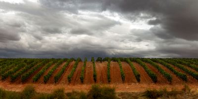 Bodegas y Viñedos Tamaral