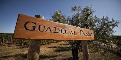 Guado al Tasso - Marchesi Antinori