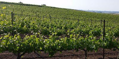 Teperberg Winery