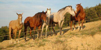 Cavalli in tenuta