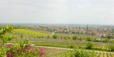 Weingut Kimich
