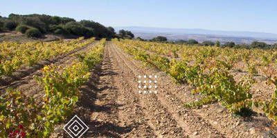 Unsi Wines