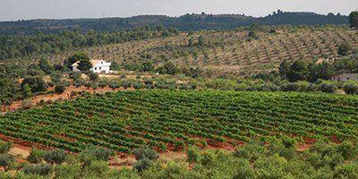 Bodegas Viñas del Cabriel
