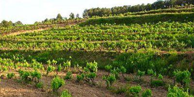 Finca Rovires y viñedos en reposo hivernal. FOTO: Vinyes d'en Gabriel.