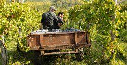 Società Agricola Vigne Guadagno