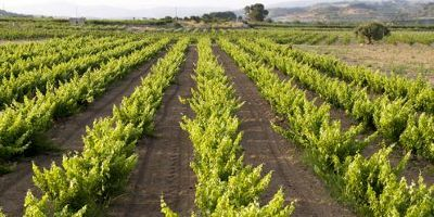 Vins Padró