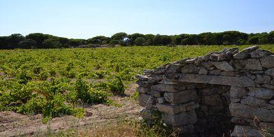 Viñedos de San Martín