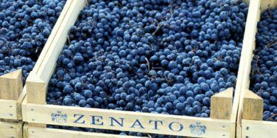 Zenato Cantina