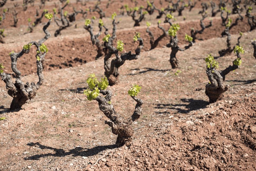 Clay Ferrous Soil