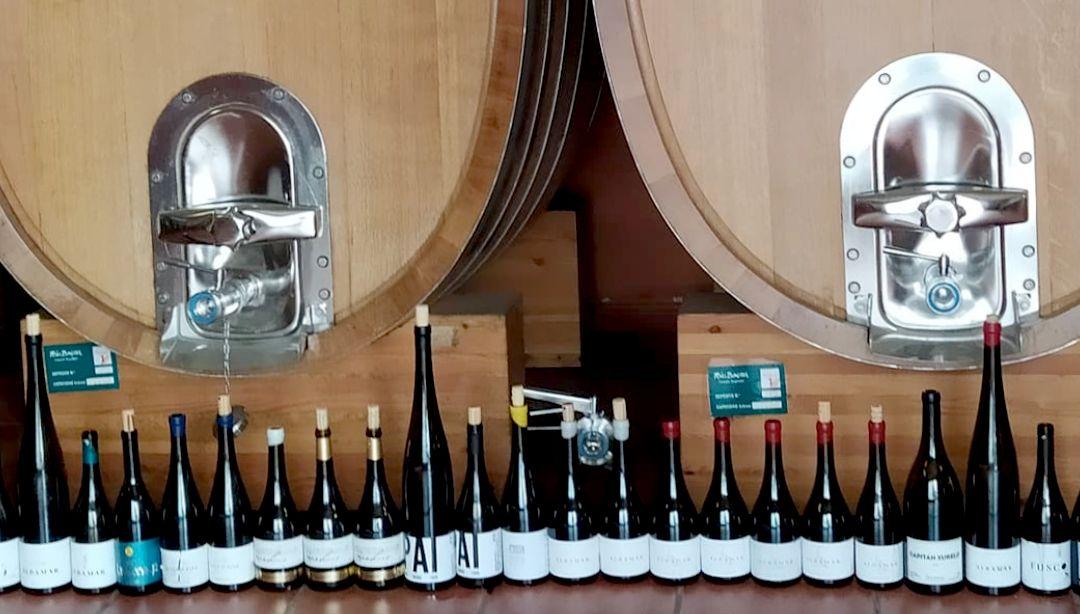 Colección vinos bodegas albamar