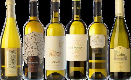 Essential wines from Rueda